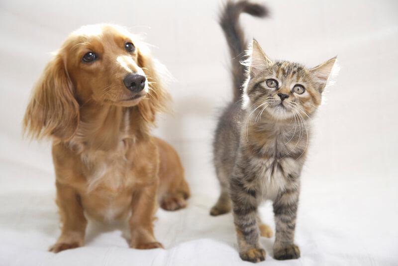 人気のペット保険「アニコム損保」で、愛するペットの長い一生をずっとフォローしてもらおう!